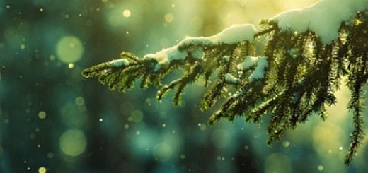 Snowy-Photography-06