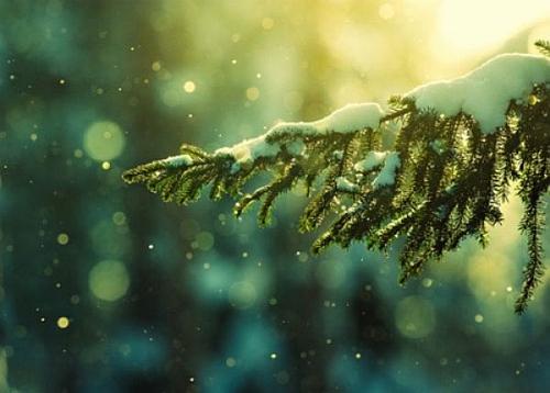 Sniegas ant eglutės