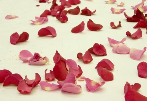 Meilė, rožių žiedlapiai