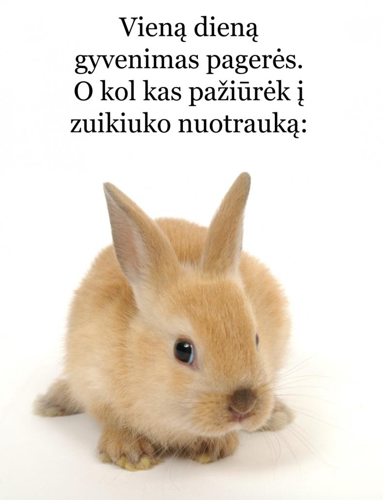Zuikiukas