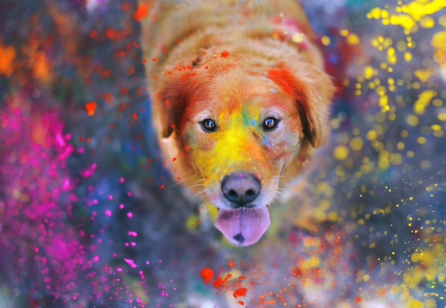 dog-photography-chuppy-golden-retriever-jessica-trinh-12