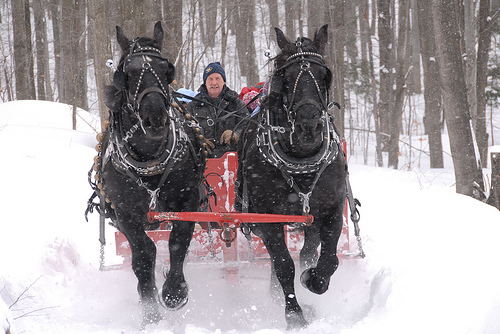 Kalėdiniai arkliai