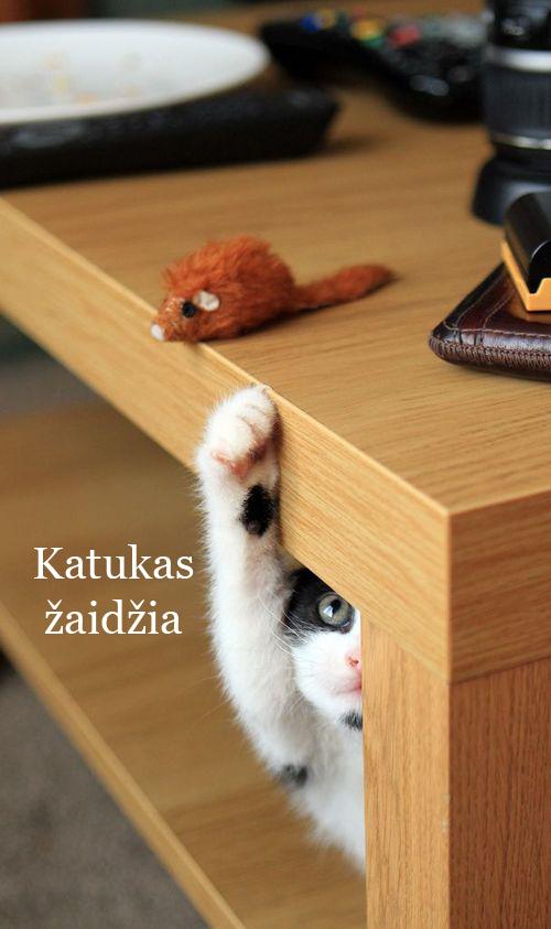 Katukas