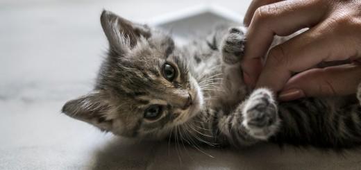 Katiniukas