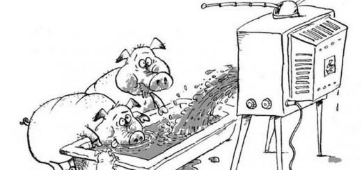 Kiaulės žiūri televizorių